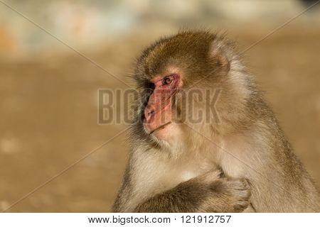 Lovely monkey