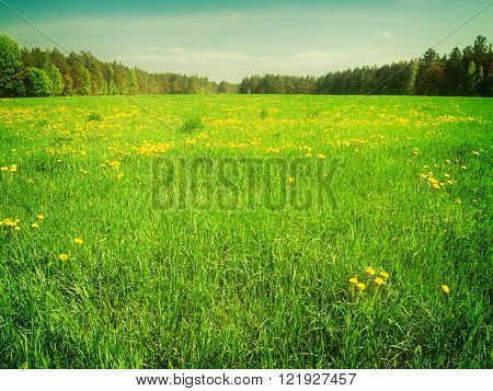 Sumer filed with green grass
