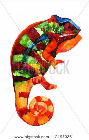Watercolor chameleon. Watercolor chameleon painting illustration isolated on white background