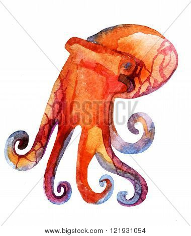 watercolor octopus isolated on white background - hand painted illustration