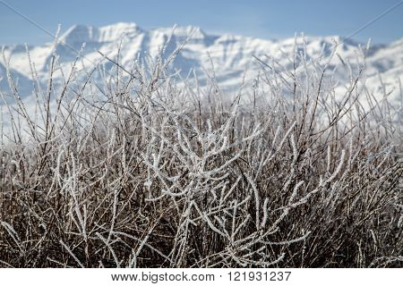 Frosted Bushes In Front Of A Beautiful Winter Mountain Snowscape