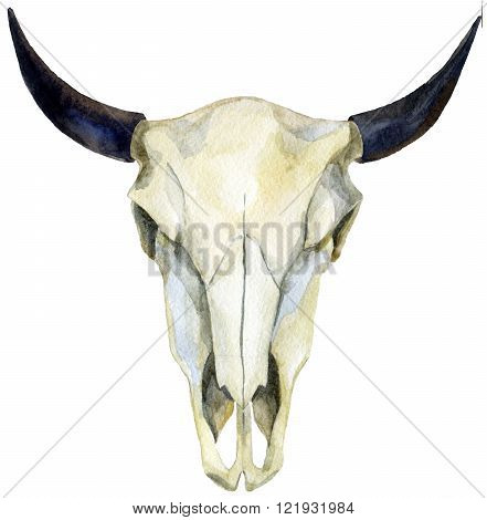 watercolor buffalo skull isolated on white background. hand painted illustration