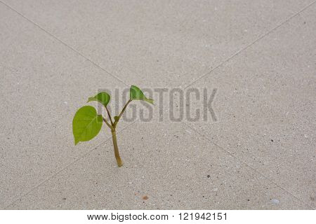 Desert Landscape With Plants In Sand Dunes. Global Warming