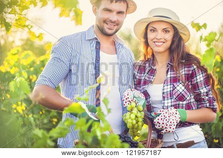 Young happy couple of wine growers walking in vine rows