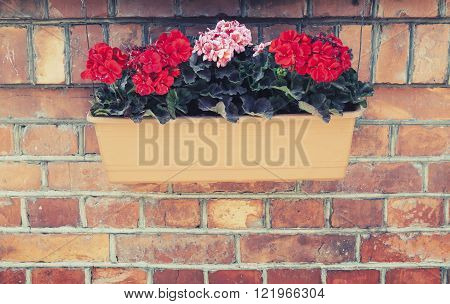 Decorative flowers in outdoor box hanging on red brick wall. Vintage tonal correction filter effect old style photo