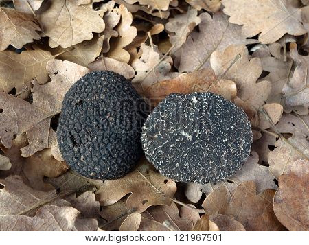 black perigord truffles (tuber melanosporum) the most commercially valuable black truffle species