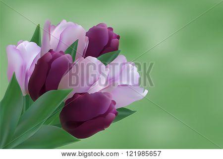 Bouquet of puple tulips