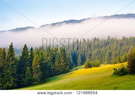 morning mist over the conifer forest on hillside meadow in Carpathian Mountains