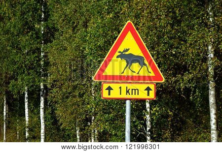 elk traffic sign against birch wood background finland