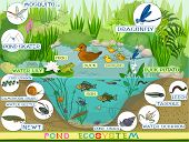 Ecosystem of pond with duck, fish, newts and other aquatic animals and plants poster