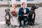 Attractive wedding couple sitting on their haunches on the pavement and holding two their purebred dogs. poster
