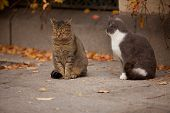 Cat and cat in the street, love poster