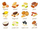 Cartoon nuts set - hazelnut almond pistachio pecan cashew brazil nut walnut peanut coconut pumpkin seeds sunflower seeds and pine nuts. Vector illustration eps 10. poster