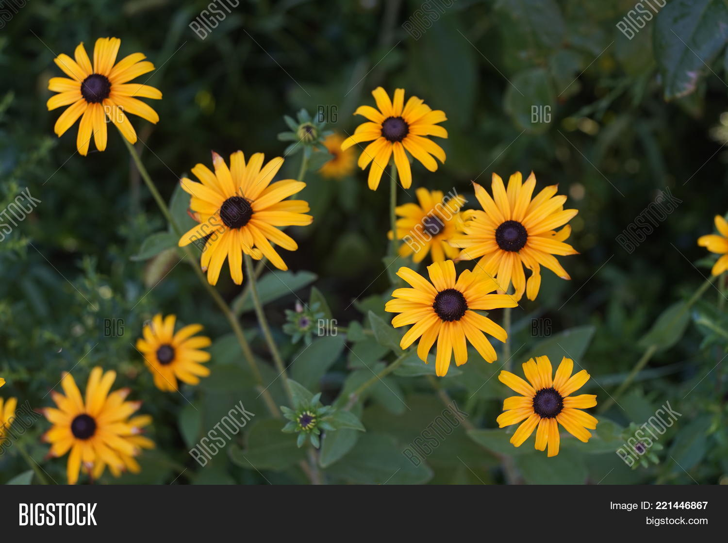 Yellow Flowers Black Image Photo Free Trial Bigstock