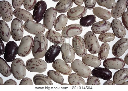 Legumes beans barbounia white red agricultural food poster