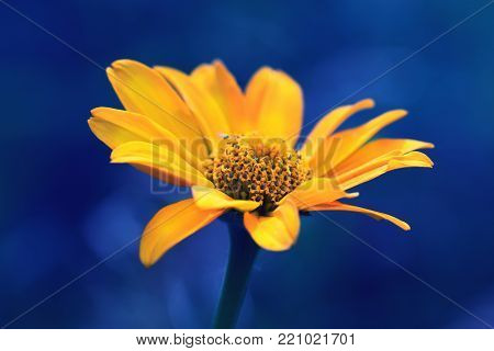 cute yellow summer flower.delicate yellow flower. fragile delicate yellow flower. summer background