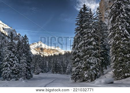 path and trees in the snowy forest with mountain an clouds in background, Gardena Valley - Dolomiti, Trentino-Alto Adige