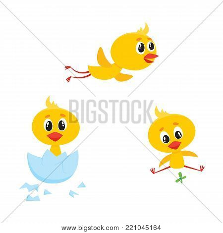 vector cartoon cute baby chicken characters set. Yellow small funny chicks flying, hatching from egg and playing with butterfly. Flat bird animal, isolated illustration on a white background.