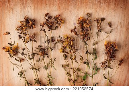 Dried flowers St. John's wort on wooden table