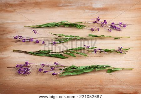Dried flowers willow herb on wooden table