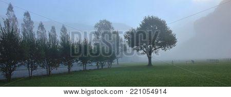 Trees on a fogy autumn morning. Scene near Brienz, Switzerland.