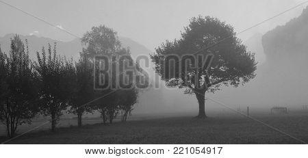 Autumn scene near Brienz, Bernese Oberland. Trees on a fogy morning.