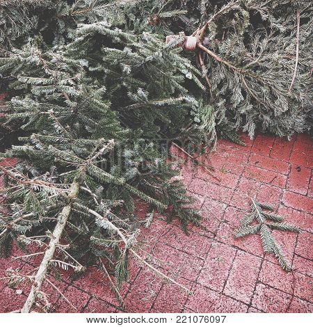 discarded christmas trees piled on pavement for rubbish collection in Germany, faded color filter poster