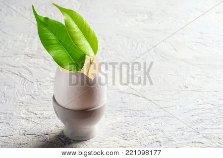 Sprout leaves green plant from eggshell Revival concept of beginning growth flowering spring new flowering minimal