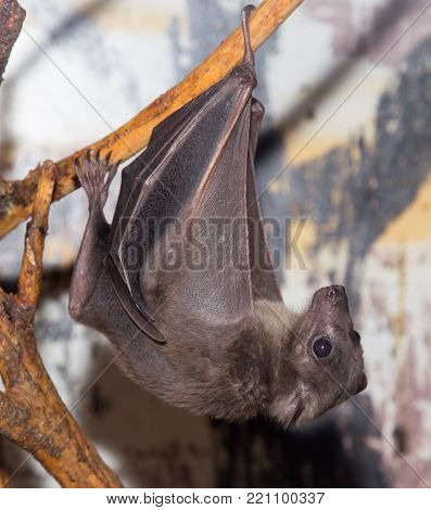 bat at the zoo . In the park in nature