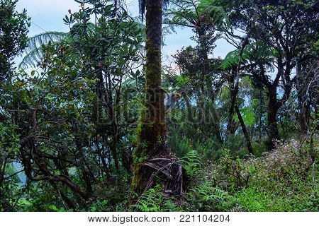 Scenic view of beautiful tropical rainforest with giant tree ferns in Horton Plains National park, Sri Lanka. Typical evergreen montane cloud forest