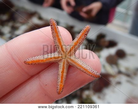 Tiny starfish being held on two fingertips.