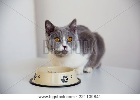 A portrait of a cat eating food from a bowl
