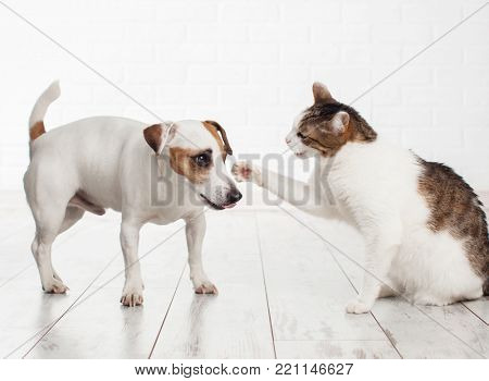 Cat and dog fighting. Pets at home