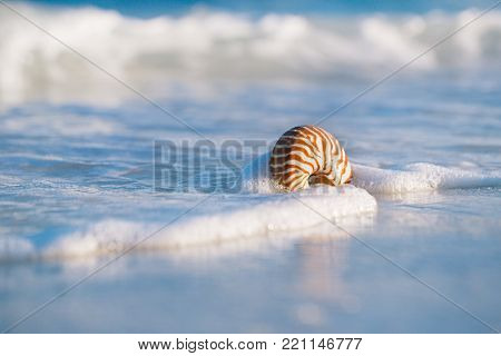 nautilus sea shell against stormy waves on early morning beach , live action