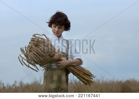 A boy in traditional Bavarian clothes stands in the field and holds a sheaf of rye in his hands. Harvesting.