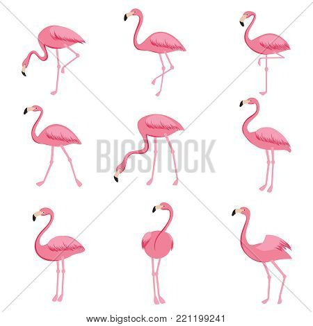 Cartoon pink flamingo vector set. Cute flamingos collection. Flamingo animal exotic, nature wild fauna illustration