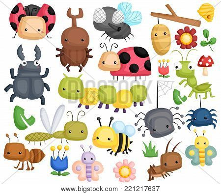 Bug Vector set with many type of content