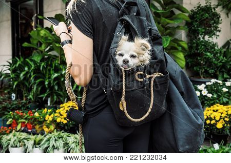 Dogs In New York City
