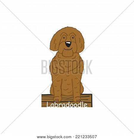 Labradoodle cartoon dog icon isolated on white background
