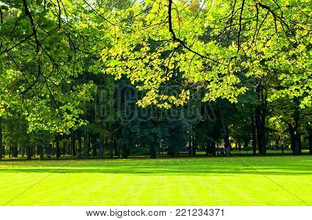 Spring landscape. Green branches of spring park trees in spring sunny day. Sunny spring park with colorful spring green trees. Spring background, bright spring nature