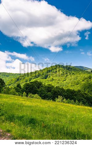 grassy fields at the foot of Pikui mountain. lovely countryside landscape on a beautiful summer day