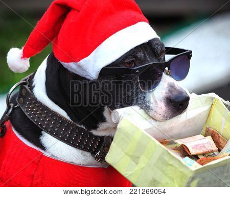 a dog in a hat and glasses holds a box of money in his mouth.