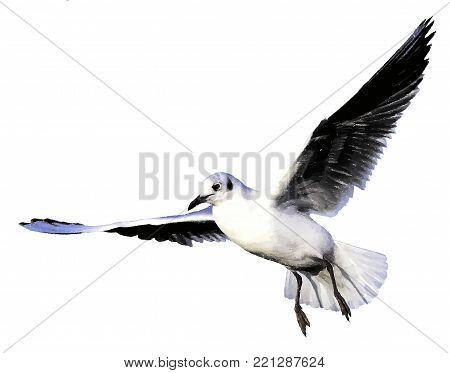 Flying wild common tern - vector - color