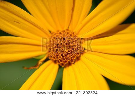As confusing as the name might be, sunflowers are not actually made of sun, but they are in fact, very yellow.