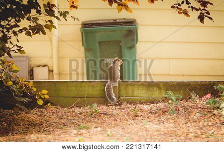 Squirrel standing on a barrier near a home in the suburbs.