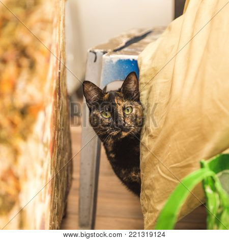 Brown multicolor cat peeking out from behind furniture and blankets inside a home.