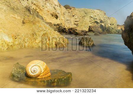 Seashell on a rock at Lolantonis beach in Paros island in Greece.