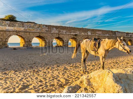 The horse in the harness is tied not far from the aqueduct.  Well-preserved aqueduct, built in Caesarea. The sandy beach is trampled by tourists. Concept of active, ecological and historical tourism