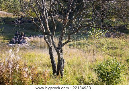 Trees in the Forest and German Soldiers are sitting in the trench in the background.