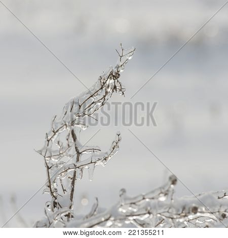 dry plants covered with ice. Winter season. Plants in the countryside. Winter in the village. Weather in the winter.